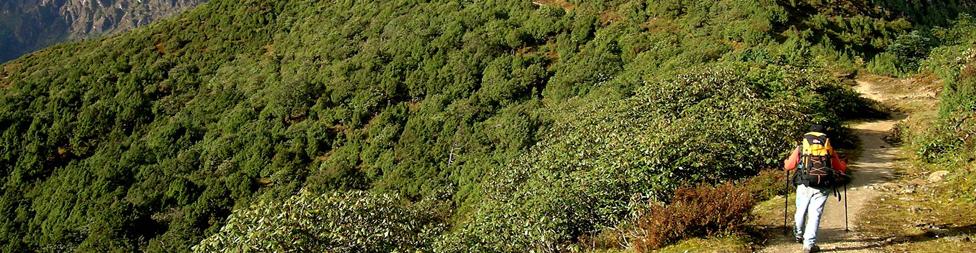 Nepal Rhododendron Trek